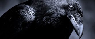 Stop the Raven Cull