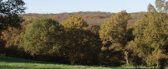 Making Epping forest a national park