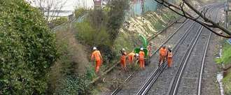 Stop Network Rail Felling Millions of Trees
