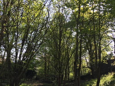 Save Daisy Bank Woods