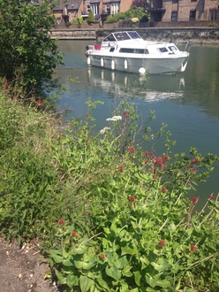 Save Oxford's Towpath and It's Wildlife