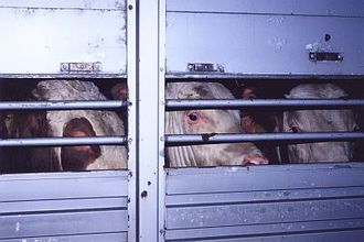 Stop live animals being exported for slaughter