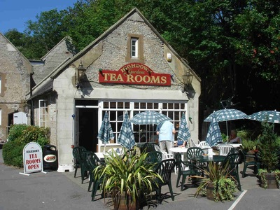 The Non Renewal of the Highdown Tearoom's Tenancy Agreement