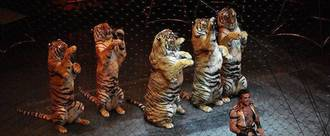 UK must ban wild animals in circuses