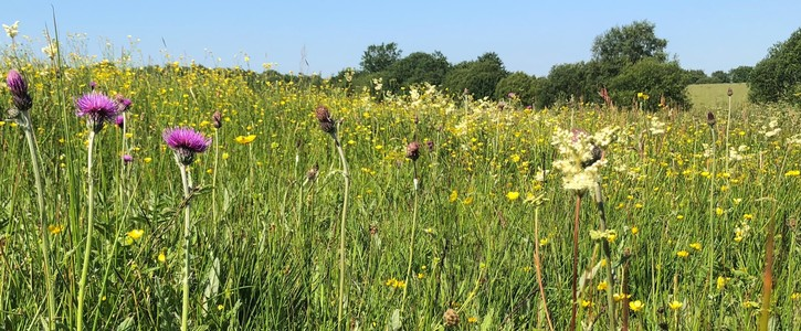 Save N Ireland's meadows