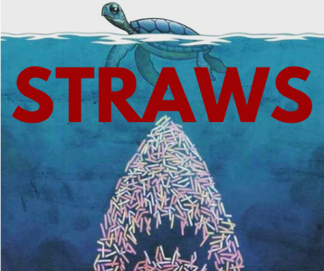 Stop the use of non degradable plastic straws: IMC Cinemas