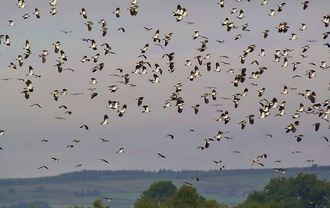 RSPB :  please support the bird life in Hellifield, North Yorkshire
