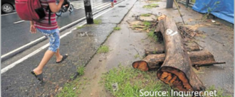 Stop Killing Trees in Taguig
