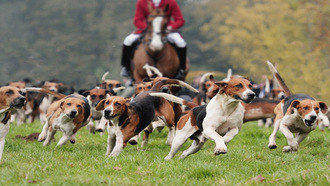 Ban Trail Hunting on National Trust Land