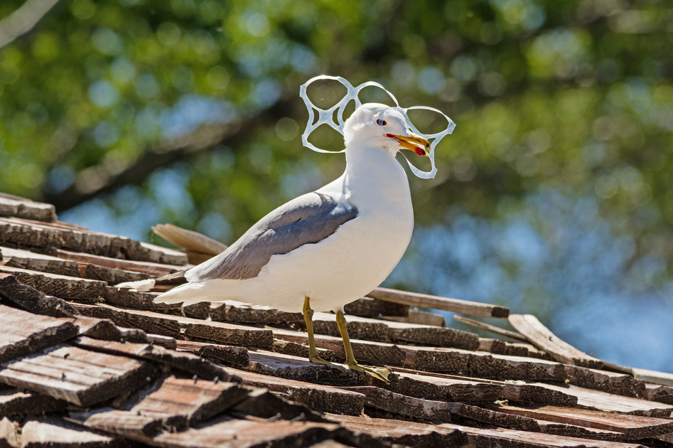 38degrees.org.uk - DITCH PLASTIC RINGS ON BEER AND CIDER CANS