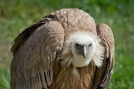 Fight Vulture Funds