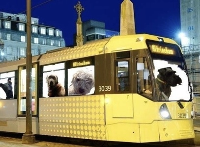 Dogs on Manchester Metrolink