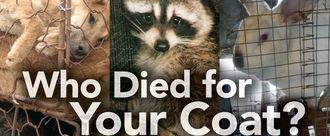 Ban the importation of animal fur into UK