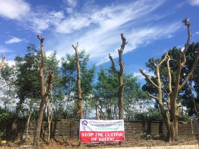 STOP the cutting of trees in Mataasnakahoy, Batangas!