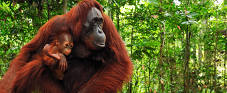 Palm oil ingredients to be written in bold