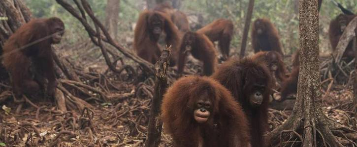 Remove Palm Oil from ALL products