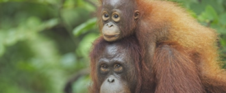 Supervalu - Stop using palm oil in your own brand products