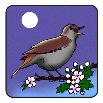 Broadcast Nightingales live on BBC radio this May