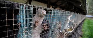 Ban Fur Farming in Ireland