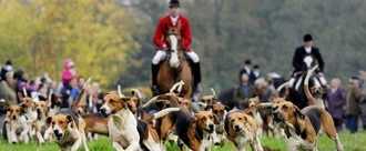 Petition to Ban Fox Hunting in Ireland