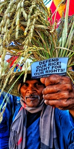 Stop the field trial and impending direct use of Golden Rice!