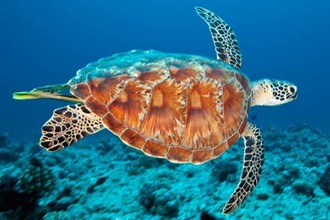 KFC, Pizza Hut and Carl's Jr: stop using plastic straws that pollute our oceans!