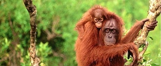 Demand Wegmans stop using destructive palm oil!