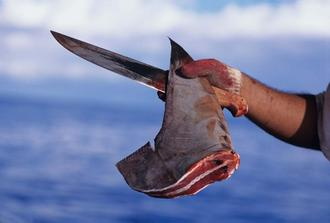 Raise awareness about shark finning and make it illegal