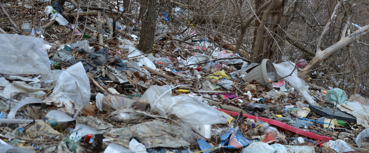 Include Clean Up of Toronto's Ravines in the City's 2019 budget
