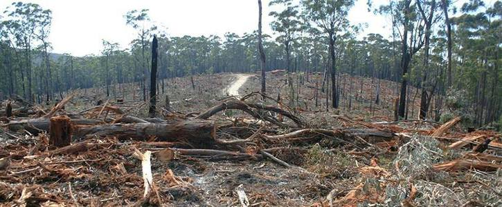Legislate to curb Australia's accelerating rate of land clearing