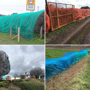 Stop the netting of hedgerows, trees and buildings to prevent birds from nesting