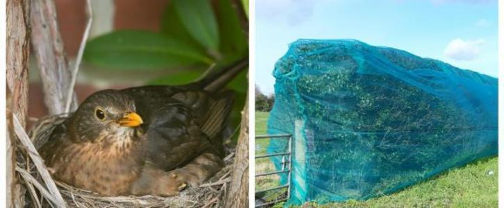 Ban the netting of trees and hedgerows