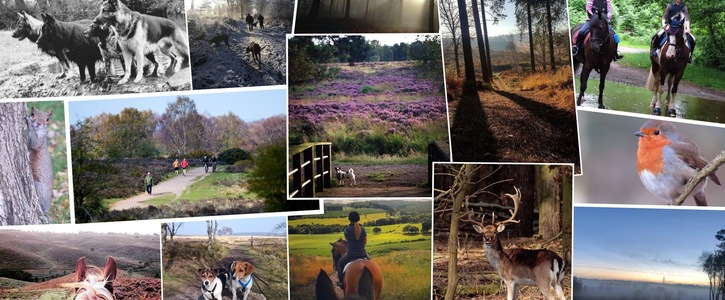 Save Cannock Chase - Area of Outstanding Natural Beauty