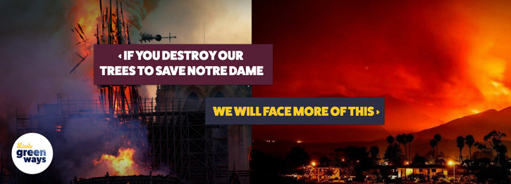 Don't fell our ancient oaks for Notre Dame