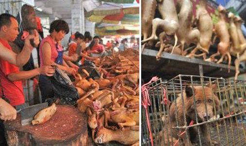 THE YULIN FESTIVAL NEEDS TO END!
