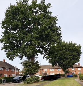 SAVE THE TREES on Ely Gardens WD6