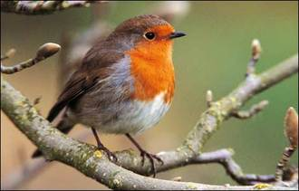Stop the call for the killing of birds