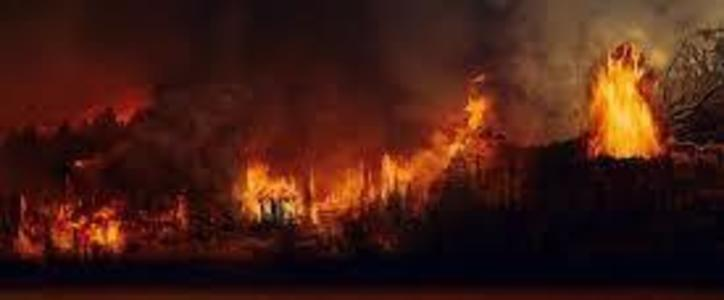 stop the amazon fires