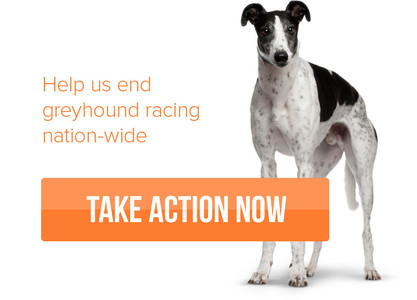 Stop Greyhound Exploitation in Ireland