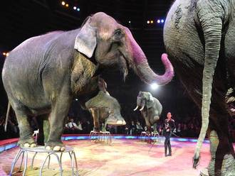 End circus animal cruelty