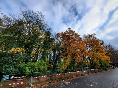Protect Dulwich Upper Wood trees - Farquhar Road