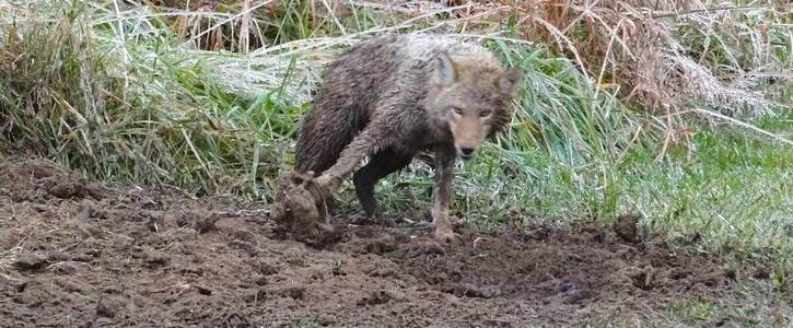 Stop selling real fur in House of Fraser