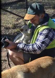 Allow Durong Dingo Sanctuary to keep all the dingoes they have at present.