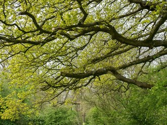 HS2 threatens Ancient Woodland