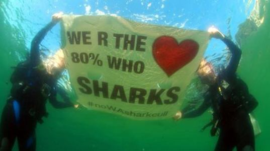 Revoke the NSW Shark Meshing Program