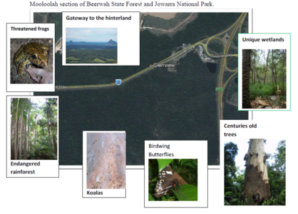 Save the iconic forest at the north end of Steve Irwin Way.(aka Friends of Steve Irwin Way Forest)