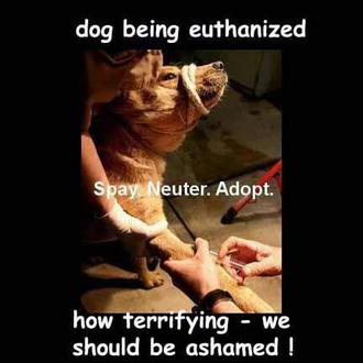 Stop Killing Impounded Pets