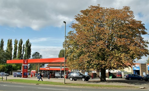 Save The Cowley Chestnut Tree
