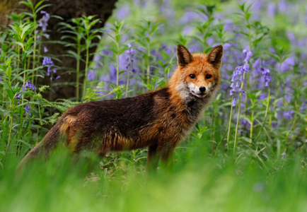 Ban Fur Trapping in the UK