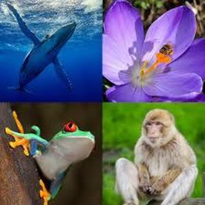 Preserving and nurturing Nature's Biodiversity Globally